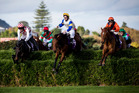 Steve Pateman (left) almost kisses the Ellerslie turf as Amanood Lad botches this fence in company with Rosetown Joe (centre) and Tim. Photo / Dean Purcell