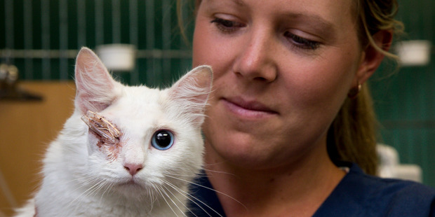 Manukau After Hours Veterinary Clinic vet nurse Kirsty Spemann treated Eileen the cat after she was shot in the eye with an arrow. The clinic paid for the $4000 treatment. Photo / Dean Purcell