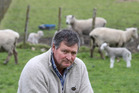 Welcome Bay farmer Colin Honeyfield says his stock has been mauled and killed by roaming dogs. Photo / John Borren
