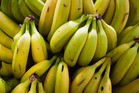 No more bananas? The potentially devastating banana disease works by shutting down the immune system of the plant. Photo / Getty
