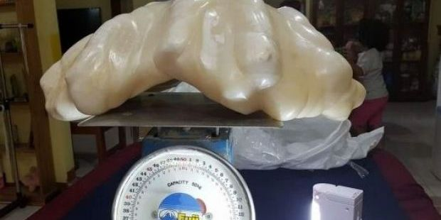 A fisherman in the Philippines found a giant 34kg pearl worth US$100million. Photo / Aileen Cynthia Maggay-Amurao / Facebook