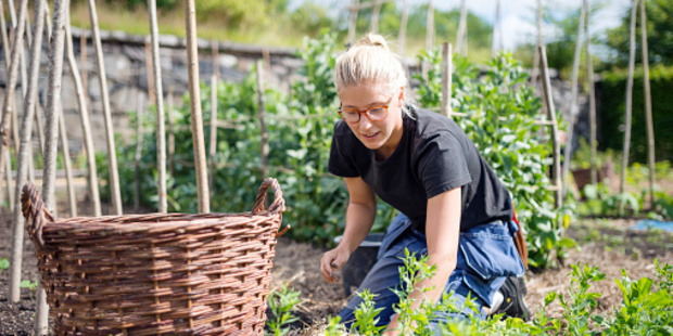 Growing food is a slow process, not one that need be rushed, and there is order in the process.