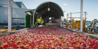 The company's Mr Apple unit underpinned the result with exports up 12%. Picture / Glenn Taylor
