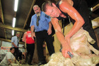 Hawke's Bay shearer Rowland Smith in action. He's received the title of Master Shearer.