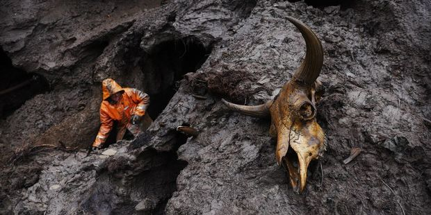 Remains of a prehistoric animal near a tusker's tunnel. Photo / Amos Chapple/RFE/RL