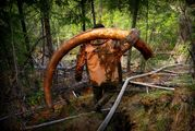 This 65kg tusk, photographed a moment after it was plucked from the permafrost, was sold for $34,000. Photo / Amos Chapple/RFE/RL