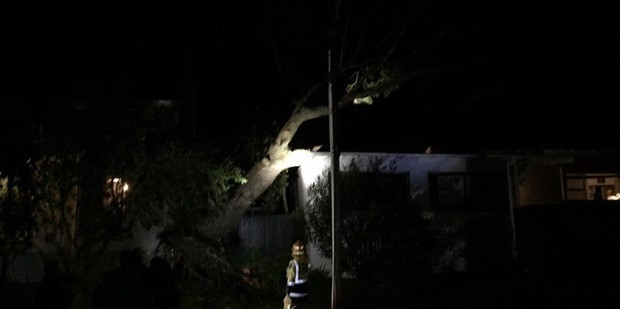 A fallen gum tree on Hanlon Crescent, Narrow Neck. Photo / Mowgli Buckingham