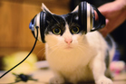 Do you have a musical moggy? This album could be just the thing for your furry friend. Photo / Getty Images