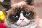The company ignored requests, so Grumpy Cat's owners are now asking a California federal court for $828,040 in damages.