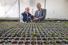 Russell Burton, manger research and investments at Scion, left, and Ian Hulton, director of Ngati Whare Holdings Ltd examine some of the native trees being propagated at Scion. Photo / Alan Gibson
