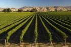 Marlborough wine country.