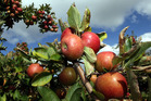 Robotic technology coming to orchards