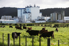 Last week, Fonterra raised its forecast milk payout for the current season by 50c. Photo / Michael Cunningham