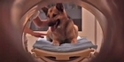 Watch: Watch: Study suggests dogs know what you're saying