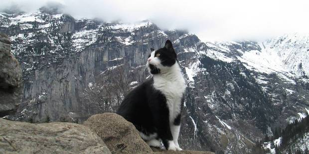 This 'handsome cat' from a local hostel helps lost tourists find their way down the mountains. Photo / Imgur, sc4s2cg