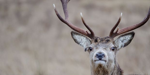 More than 300 reindeer killed by freak lightning strike in Norway