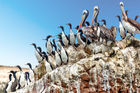 The Ballestas Islands on the Paracas Peninsula are an animal lover's paradise. Photo / 123RF