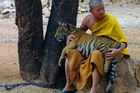 The popular Tiger Temple in Kanchanaburi province, west of Bangkok, closed in June. Photo / 123RF