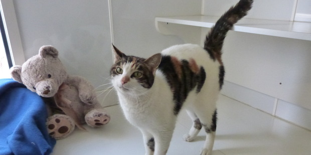Lilly is a friendly cat looking for a home.
