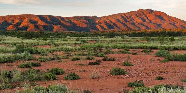 There's plenty to forage in the outback lands around the Western MacDonnell Ranges if you know what you're looking for. Photo / Alamy