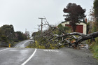 A tree that brought down power lines on Dr's Point Road on Wednesday afternoon. Photo / Gregor Richardson / Otago Daily Times