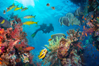Experience the clear water and thriving reefs of Fiji with a dive. Photo / 123RF