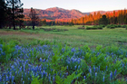 Ackerson Meadow will become part of Yosemite National Park in California. Photo / AP