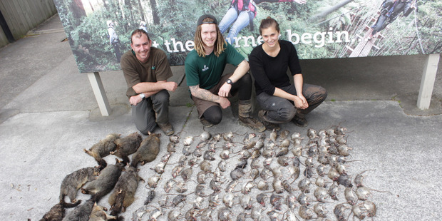 Rotorua Canopy Tours staff with the results of one nights trapping in Dansey Road Scenic Reserve, Rotorua. PHOTO/SUPPLIED