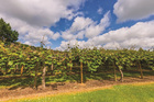 The highest earning organic crop is kiwifruit, which accounts for about 20 per cent of all organic exported produce.