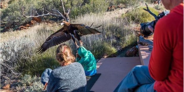An eagle attempted to lift a boy into the air during a bird show at Alice Springs, Australia, two months ago. Photo / Instagram