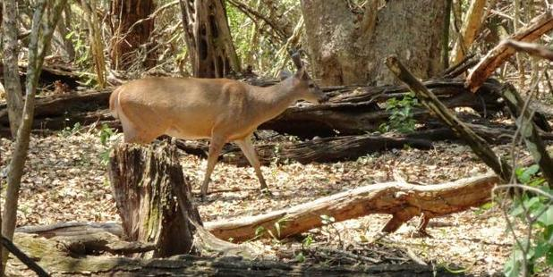 The family spotted deer in the area. Photo / Gary Burchett