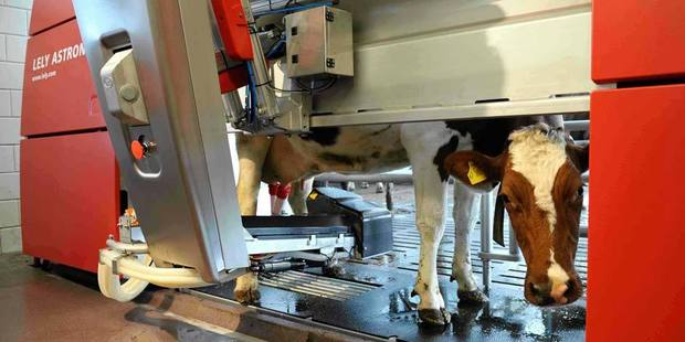 MILKING IT: Robotic milking machines are  a $1.9 billion industry projected to grow to $8.5bn by 2026. Photo / supplied