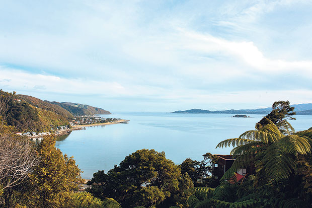 The view from Moller's Wellington home. Photo / Anna Briggs