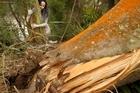 Rotorua enivronmental activist Kiri Danielle is appalled at the apparent vandalism of local trees.