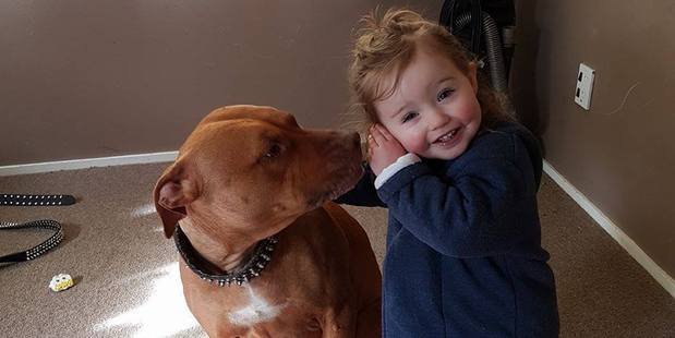 """Layla Barry, 2, and Chopper are like """"two peas in a pod' says Layla's mum Sarah. Photo/ supplied"""