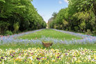 Cismigiu Gardens is one of the largest and most beautiful public parks in downtown Bucharest. Photo / 123RF