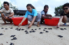 Indonesians release baby turtles into the ocean in Bali, Indonesia. Photo / AP