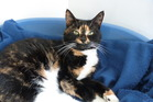 Tessa is a friendly, relaxed cat looking for a dog-free home.