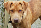 Reese is looking for an active country home.