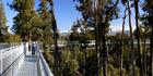The Treetops West Coast Walkway in Hokitika. Photo / Supplied