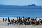 A crowd of people gathered at Moturiki (Leisure Island) yesterday to help clan the beach. Photo/George Novak