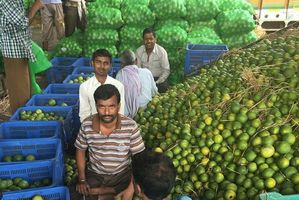 The crowded Delhi fruit market is the eventual destination of kiwifruit exported from the Bay of Plenty. Photo/Juliet Rowan