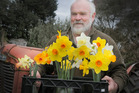 Wayne Hughes and some of his best daffodils. PHOTO/BEVAN CONLEY