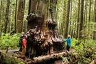 Vancouver Island Ancient Forest. Photo / Richard Graham