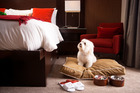 Pampered pooches can enjoy the 'Bow-Wow Package