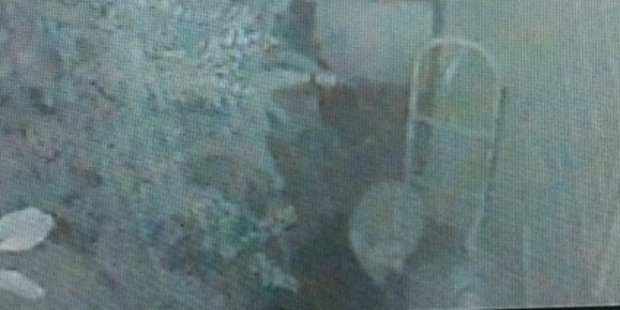 CCTV footage taken by the breeder shows a person stealing rabbits from her Auckland property around 5am on Saturday 10 September.