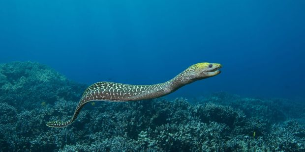 Some DHBs have seen an increase in patients needing foreign objects removed this year, but there has not been a repeat of 2012's eel incident. Photo / 123rf.com