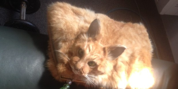A taxidermy cat handbag sold for $545 on Trade Me. Photo / Trade Me