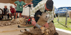 A sheep sheering event at the Hororata Highland Games. Photo / Christchurch Star