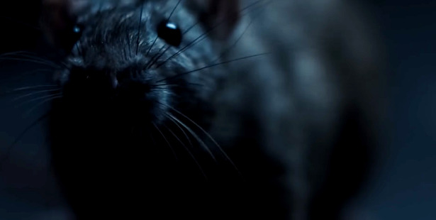 Loading Filmmaker Morgan Spurlock's latest documentary isn't a good choice for those with a fear of rats.